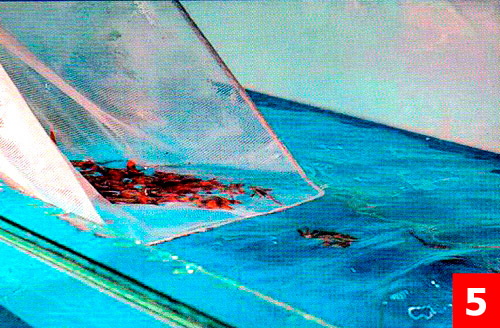 Рыба оптом аквариумные рыбки оптом
